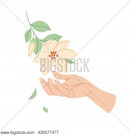 Female Hand Touches Tender Flower. Simple Woman Hand With Branch Of Blooming Plant Isolated On White