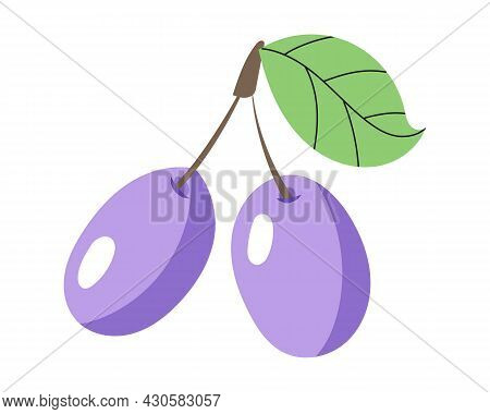 Two Ripe Plums With A Leaf. Ripe Berry, Lilac Plum. Food Drawn In A Vector By Hand. Vector Illustrat