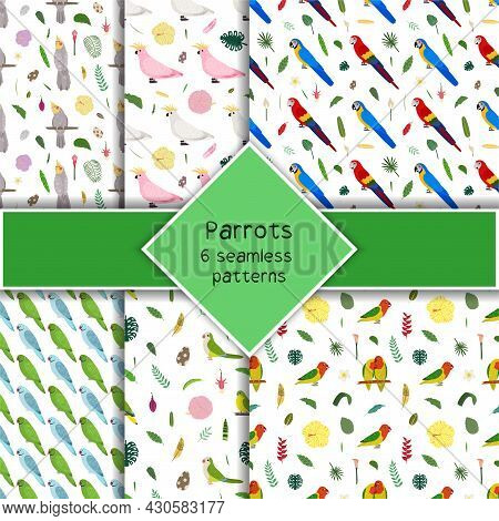 Parrot Seamless Pattern Collection In Cartoon Style. Parrots Macaw, Pink And White Cockatoo, Lovebir