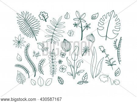 Set Of Colored Lines Of Plant Elements, Petals, Branches And Flowers. Vector On A White Background,