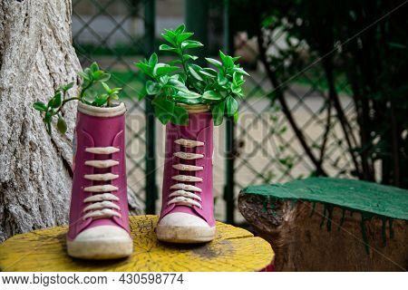 Old Boots Used As Flower Old Boots Used As Flower