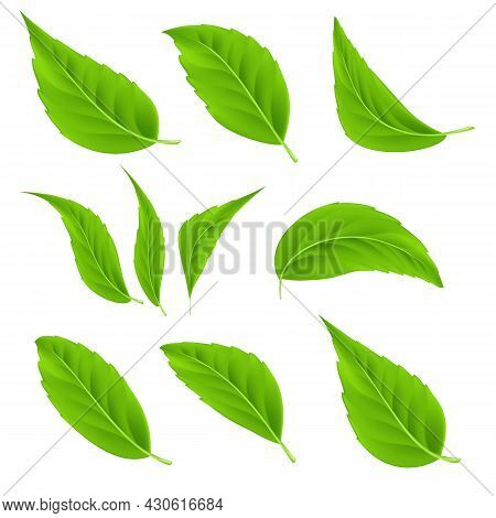 Vector Realistic Green Leaves Set Detailed 3d Summer Tree Leaves For Bio And Healthy Products