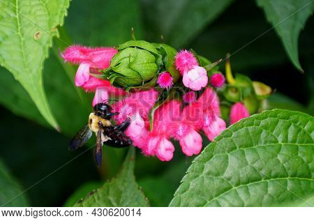 A Bee Pollinating A Tiny Pink Flower