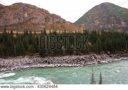 A Stormy Stream Of A Beautiful Turquoise River Flowing Through The Coniferous Forest At The Foot Of