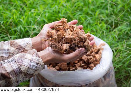 Hand Farmer Holding Husk Coconut Or Coconut Spathe Fiber Natural For Fertilize Orgarnic Plant Tree.