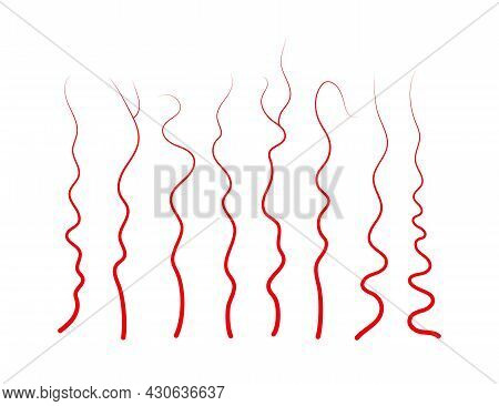 Set Of Human Veins And Arteries. Red Blood Vessels And Capillaries. Vector Illustration Isolated On