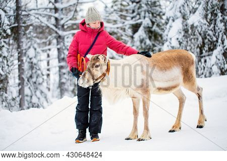 Adorable pre-teen girl walking with reindeer in winter forest in Lapland Finland
