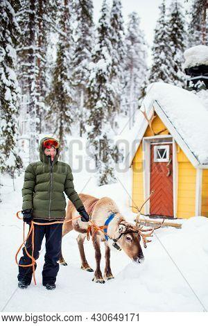 Cute teenage boy walking with reindeer in winter forest in Lapland Finland
