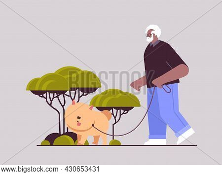 African American Senior Man Walking In Park With His Little Dog Grandfather Relaxing With Pet