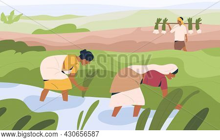 Indian Women Farmers Working On Rice Field, Standing In Water. Agriculture Workers On Farm Land. Peo