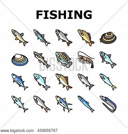 Commercial Fishing Aquaculture Icons Set Vector. Japanese Cockle And Anchovy, Common And Silver Carp