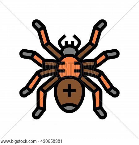 Spider Halloween Color Icon Vector. Spider Halloween Sign. Isolated Symbol Illustration
