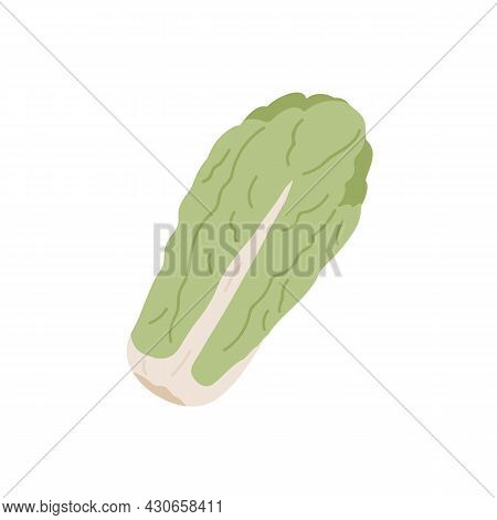 Long Head Of Fresh Chinese Or Napa Cabbage. Leafy Vegetable From China. Icon Of Raw Whole Veggie. Fl