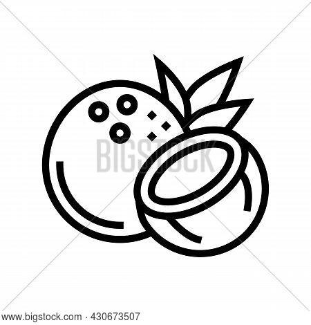 Coconut Exotic Nut Line Icon Vector. Coconut Exotic Nut Sign. Isolated Contour Symbol Black Illustra