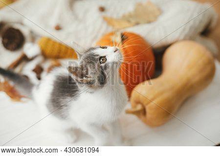 Cute Kitten Portrait On Background Of Autumn Leaves, Pumpkin, Cozy Sweaters On White Wood. Adorable