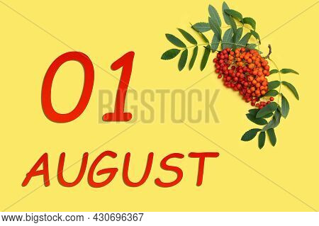 1st Day Of August. Rowan Branch With Red And Orange Berries And Green Leaves And Date Of 1 August On