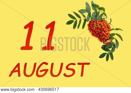 11th Day Of August. Rowan Branch With Red And Orange Berries And Green Leaves And Date Of 11 August