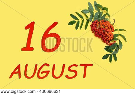 16th Day Of August. Rowan Branch With Red And Orange Berries And Green Leaves And Date Of 16 August
