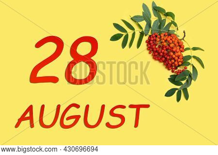 28th Day Of August. Rowan Branch With Red And Orange Berries And Green Leaves And Date Of 28 August