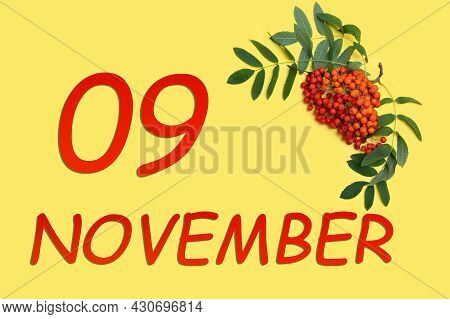 9th Day Of November. Rowan Branch With Red And Orange Berries And Green Leaves And Date Of 9 Novembe
