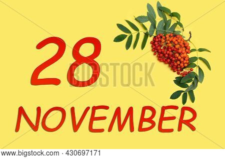 28th Day Of November. Rowan Branch With Red And Orange Berries And Green Leaves And Date Of 28 Novem