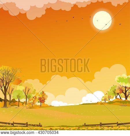Autumn Landscape Wonderland Forest With Grass Land,mid Autumn Natural In Orange Foliage,fall Season