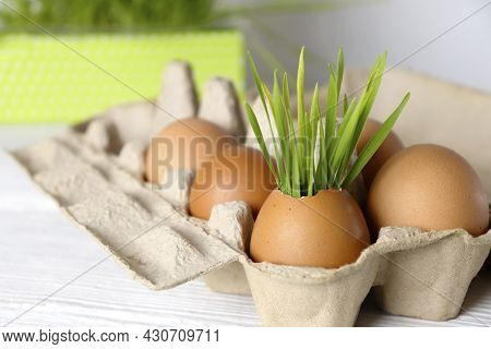 Greens Growing In Eggshells In An Egg Tray. The Concept Of Recycling, Reuse, Composting. Ecological