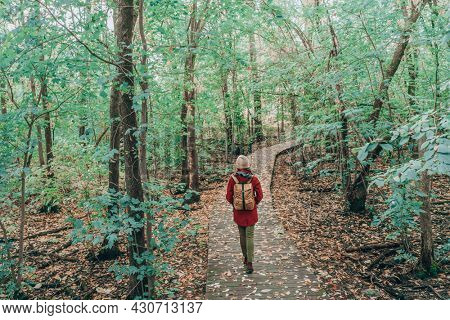 Nature activity hike. Woman with bag walking in gren forest woodland in city park. Travel hike fall destination in Quebec, Canada.