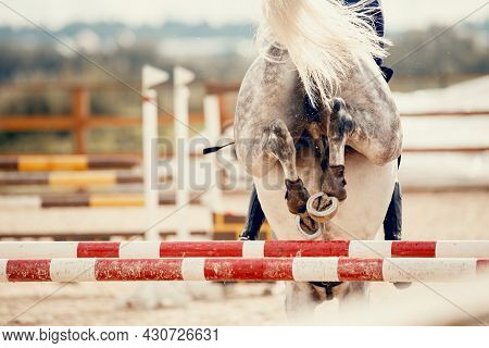 The Shod Hooves Of A Gray Horse Over An Obstacle. The Horse Overcomes An Obstacle. Equestrian Sport,