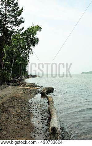 A Long Felled Tree Lies On The Shore Of A Large Lake At The Edge Of The Forest.