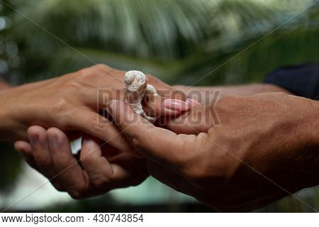 Couple Exchanging seashell Wedding Ring against tropical background