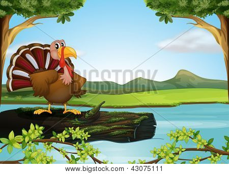 Illustration of a turkey in the river