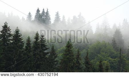 Raining In Mountains, Foggy Forest, Heavy Mystical Fog, Scary Stormy Mist Smoke Over Alpine Wood On
