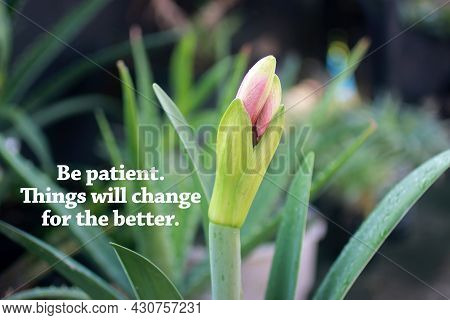 Inspirational Quote - Be Patient. Things Will Change For The Better. With Bud Plant Of Purple Lily F