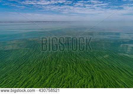 Water Pollution By Blooming Blue-green Algae - Cyanobacteria Is World Environmental Problem. Water B