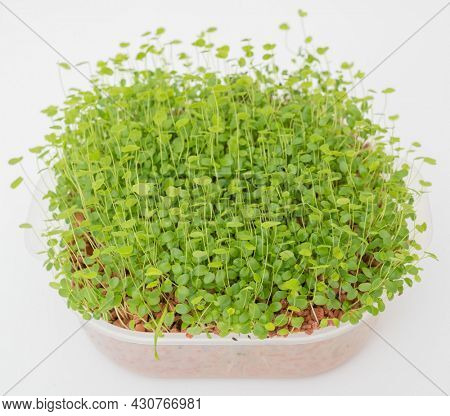 Microgreens in a plastic cup on a white background