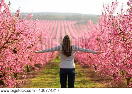 Back View Of A Happy Woman Outstretching Arms In A Pink Flowered Field Celebrating Spring Season