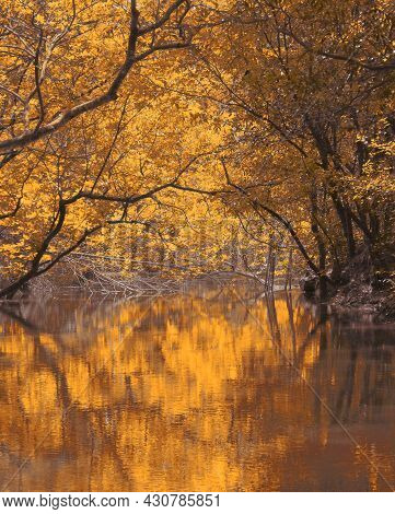 Beautiful Fall Colors In A Deciduous Forest In Autumn Season, India