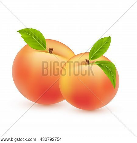 Peach Vector. Sweet Summer Fruit Isolated On White Background. Two Realistic Peaches With Green Leav