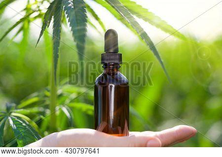 Hemp Oil, Hand Holds Hemp Oil Bottle Against Marijuana Plant, Cbd Oil Bottle. Natural Herbal Medicin