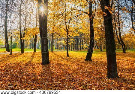 Autumn sunny landscape, autumn park at sunrise. Autumn park trees and fallen lush autumn foliage covering the ground, sunny autumn landscape, autumn landscape, autumn park, autumn trees in sunny autumn weather