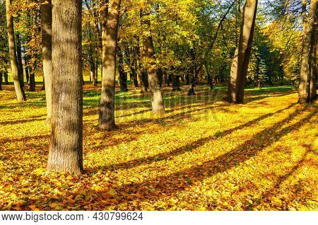 Autumn picturesque landscape, autumn trees with golden foliage in October park. Colorful autumn landscape in soft tones, October park in sunny autumn day, autumn sunny scene, autumn landscape, autumn trees