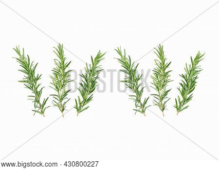 Branches Of Aromatic Grass Rosemary Branches Of Aromatic Grass Rosemary