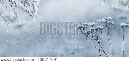 Frost-covered Dry Stems Of Plants On A Blurred Background During A Blizzard
