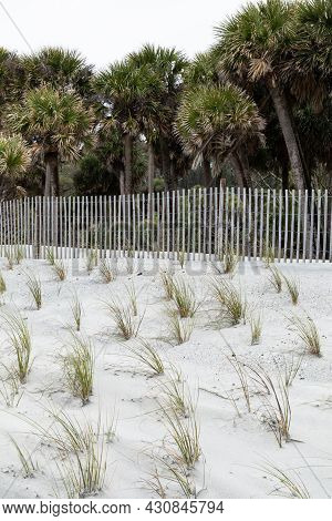White Sand Dunes Planted With Seagrass Bordered By Erosion Fencing And Palmetto Palm Trees, Hunting
