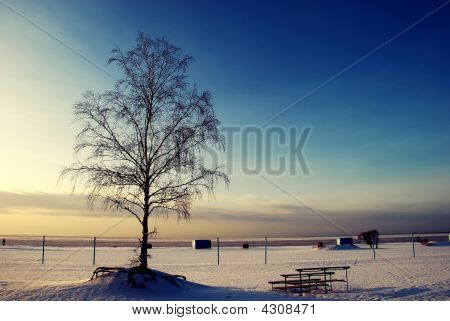 Alone Tree In The Snow Field