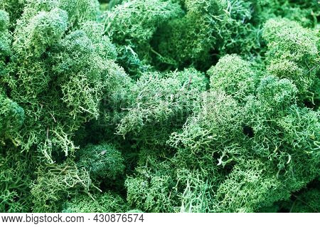 Green Stabilized Preserved Moss For Ecological Interior Design