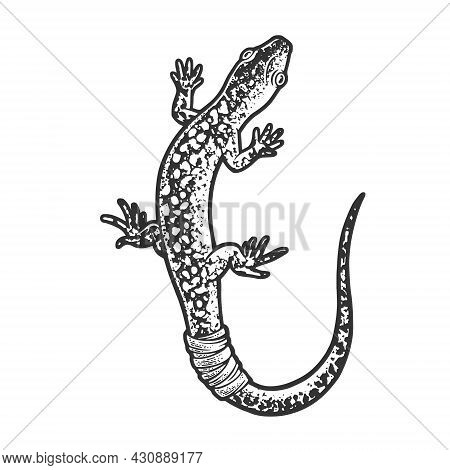 Lizard With Bandaged Tail Sketch Engraving Vector Illustration. T-shirt Apparel Print Design. Scratc