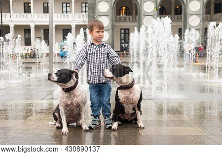 A Little Boy Walks With Two Dogs. Walking Animals And Children