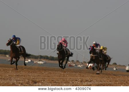 Thoroughbred Horseracing